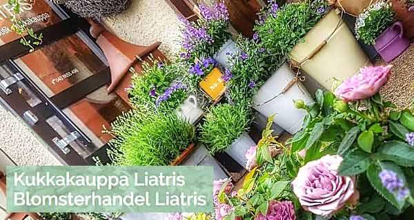 Parainen Kukkakauppa Liatris